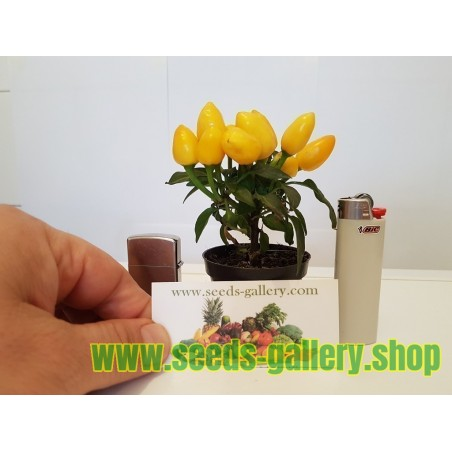 Semillas de Pimiento Mini Ornamentales - Multicolor