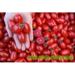 Tomato Donatella Organic Seeds