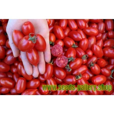 Tomatensamen DONATELLA BIO