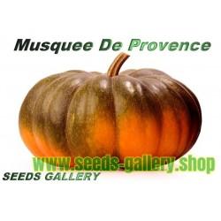 Muskatkürbis Moschata de Provence Kürbis Samen