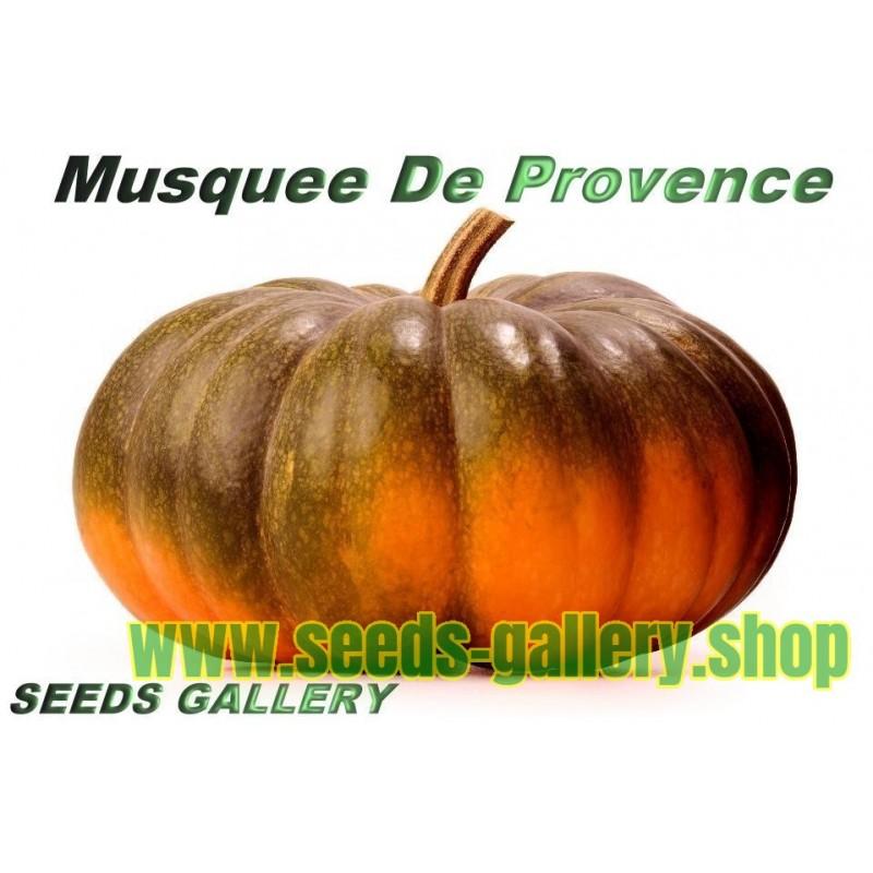 Musquee De Provence Pumpa Fröer