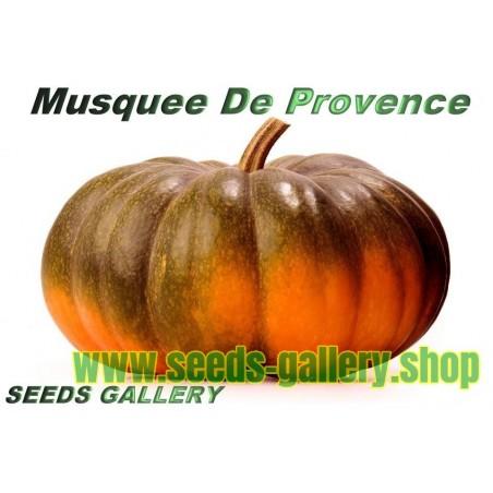 Graines de Citrouille Musquée de Provence