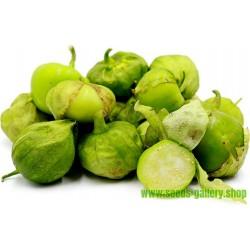 Graines Tomatillo Vert