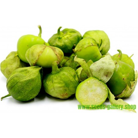 Graines Tomatillo Vert - Toma Verde (Physalis ixocarpa)