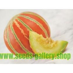 Graines de melon KAJARI
