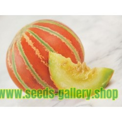 Semillas de melon KAJARI