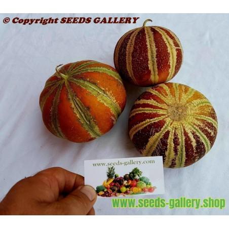 Sällsynta KAJARI Melon Frön
