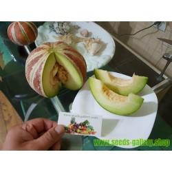 Seltene KAJARI Melone Samen