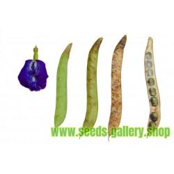Semillas de CONCHITA AZUL (Clitoria ternatea)