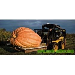 Semi di Zucca Atlantic Giant (824.86 kg)