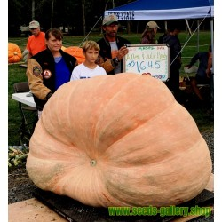 Atlantic Giants Pumpkin Seeds