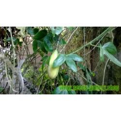 Semi di Frutto Della Passione - Passionfruit Banana