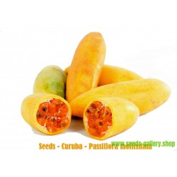Σπόροι Curuba - Banana Passion fruit - Passiflora mollissima