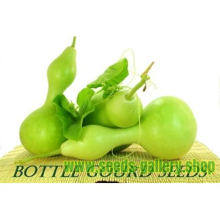 Koreaminze Samen Ostasiatische Riesenysop (Agastache rugosa)