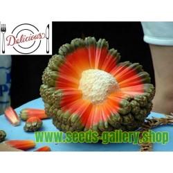Σπόροι φρούτο Hala (Pandanus tectorius)