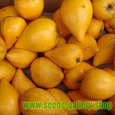 Semi di melone PRESCOTT FOND BLANC