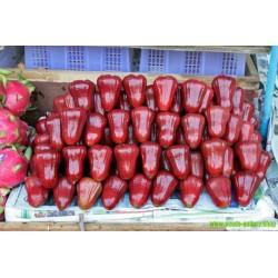 Sementes de Jambo rosa, Jambo, Jambeiro