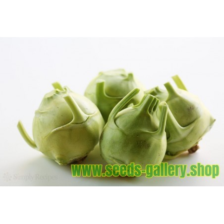 "Kohlrabi Seeds ""Best of All"""
