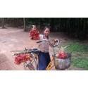 Graines d'arbre Malay lac (Schleichera oleosa)