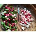 Ramontchi, Governor's Plum, Batoko Plum Seeds