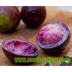 Zvezdasta Jabuka Seme - Star Apple (Chrysophyllum cainito)