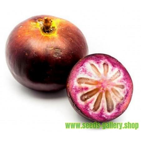 Sternapfelbaum - Star Apple Samen (Chrysophyllum cainito)