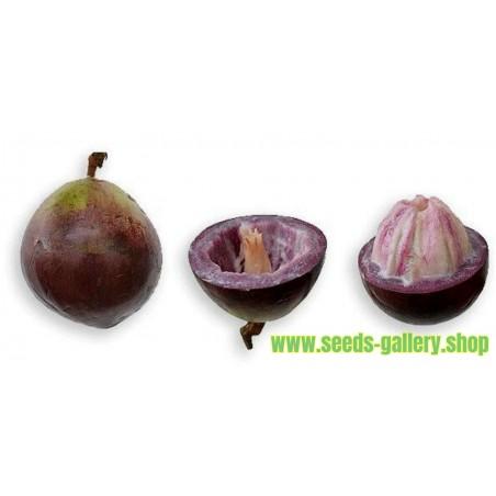 Star Apple Seeds (Chrysophyllum cainito)