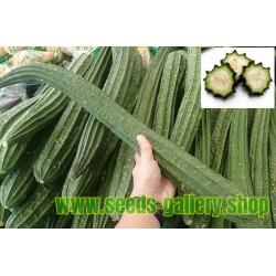 Flügelgurke Samen, Angled Luffa, Chinese Okra (Luffa acutangula)
