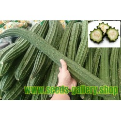 Semillas de ESPONJA VEGETAL (Luffa acutangula)