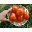 Tomatfrön Saint Pierre