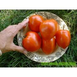 Graines bio Tomate Amish Pasta
