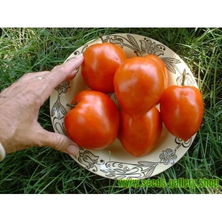 Tomato Seeds Amish Paste
