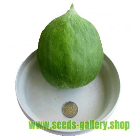 Graines de melon - concombre des Pouilles ou Carosello Barattiere