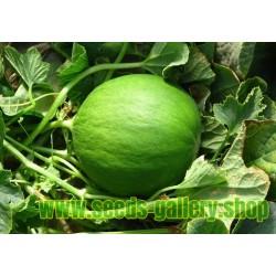 Cucumber - Melon Seeds - Carosello Barattiere