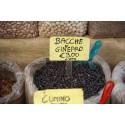 Chayote Samen (Sechium edule)