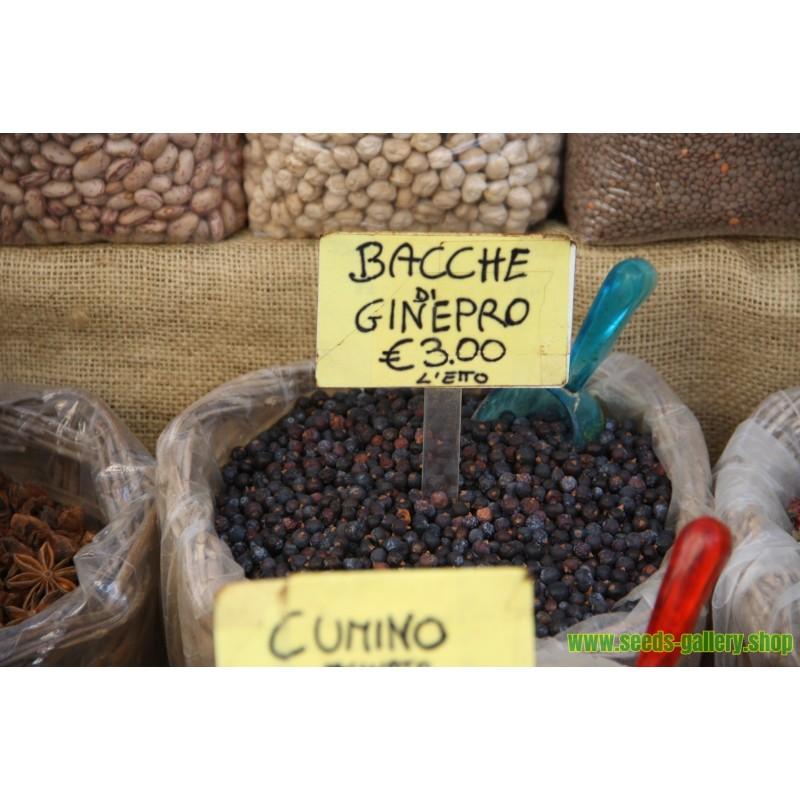 Chayote graines (Sechium edule)