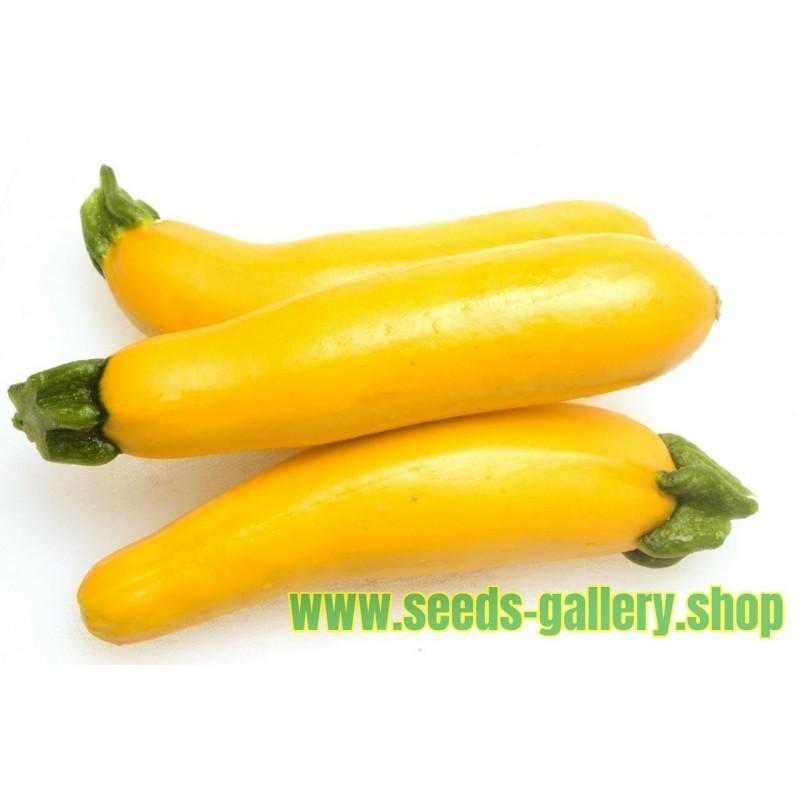 Yellow - Golden Zucchini Seeds SOLEIL