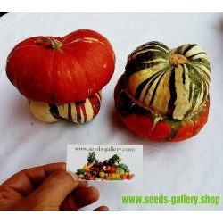 Mini Red Turban Squash Seeds