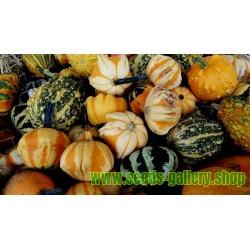Semillas de Calabazas Decorativas DAISY