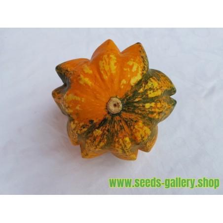 Sementes de abóbora ornamental DAISY