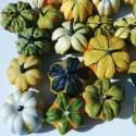 Graines de Hyssope - Plante médicinale (Hyssopus officinalis)