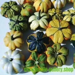Seme Ukrasne Tikvice DAISY