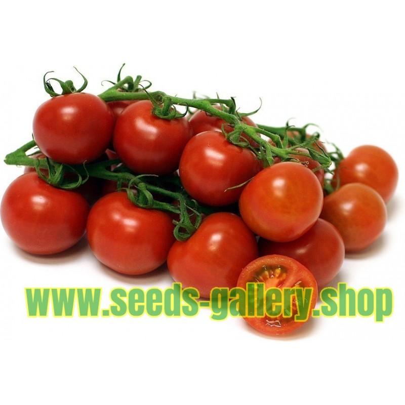 Graines de Tomate Sweet Princess