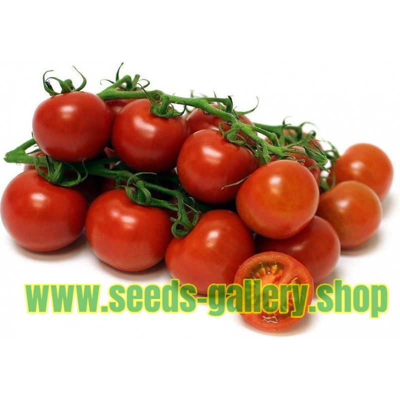 Heirloom Tomato Seeds Sweet Princess