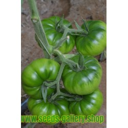 Graines de Tomate COSTOLUTO PACHINO