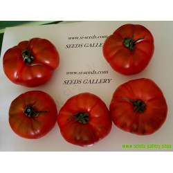 Costoluto Pachino - Sic. Heirloom Tomato Seeds