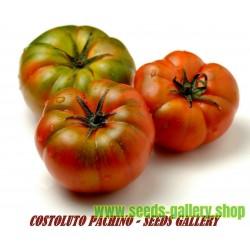 Sementes de Tomate Sic. COSTOLUTO PACHINO