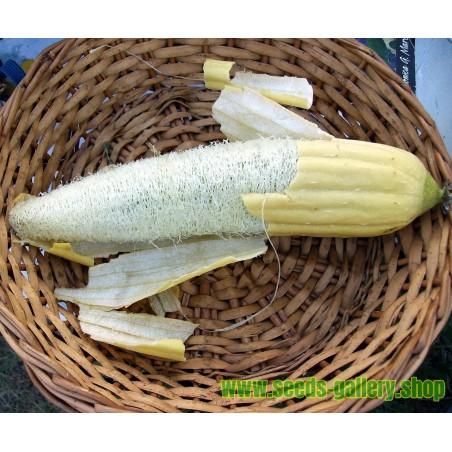 Luffa tvättsvampar Frön (Luffa aegyptiaca)