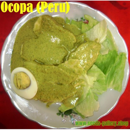 Mexikansk Tagetes Fröer (Tagetes minuta)