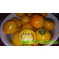Zuti Slatki Chili Seme - Veliki Plodovi